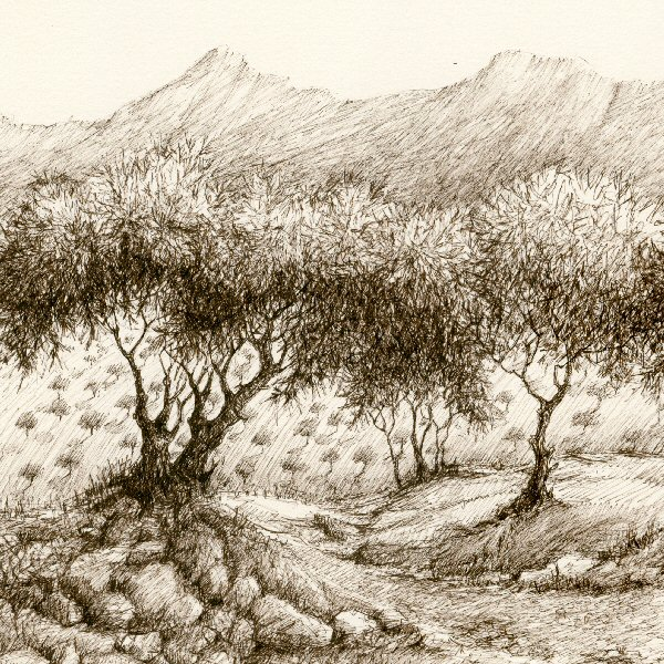 Argan Trees in the Anti Atlas