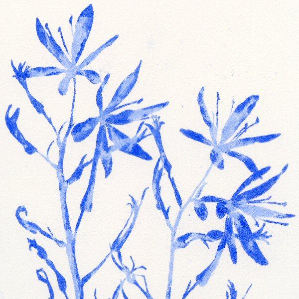 Camassia Blue